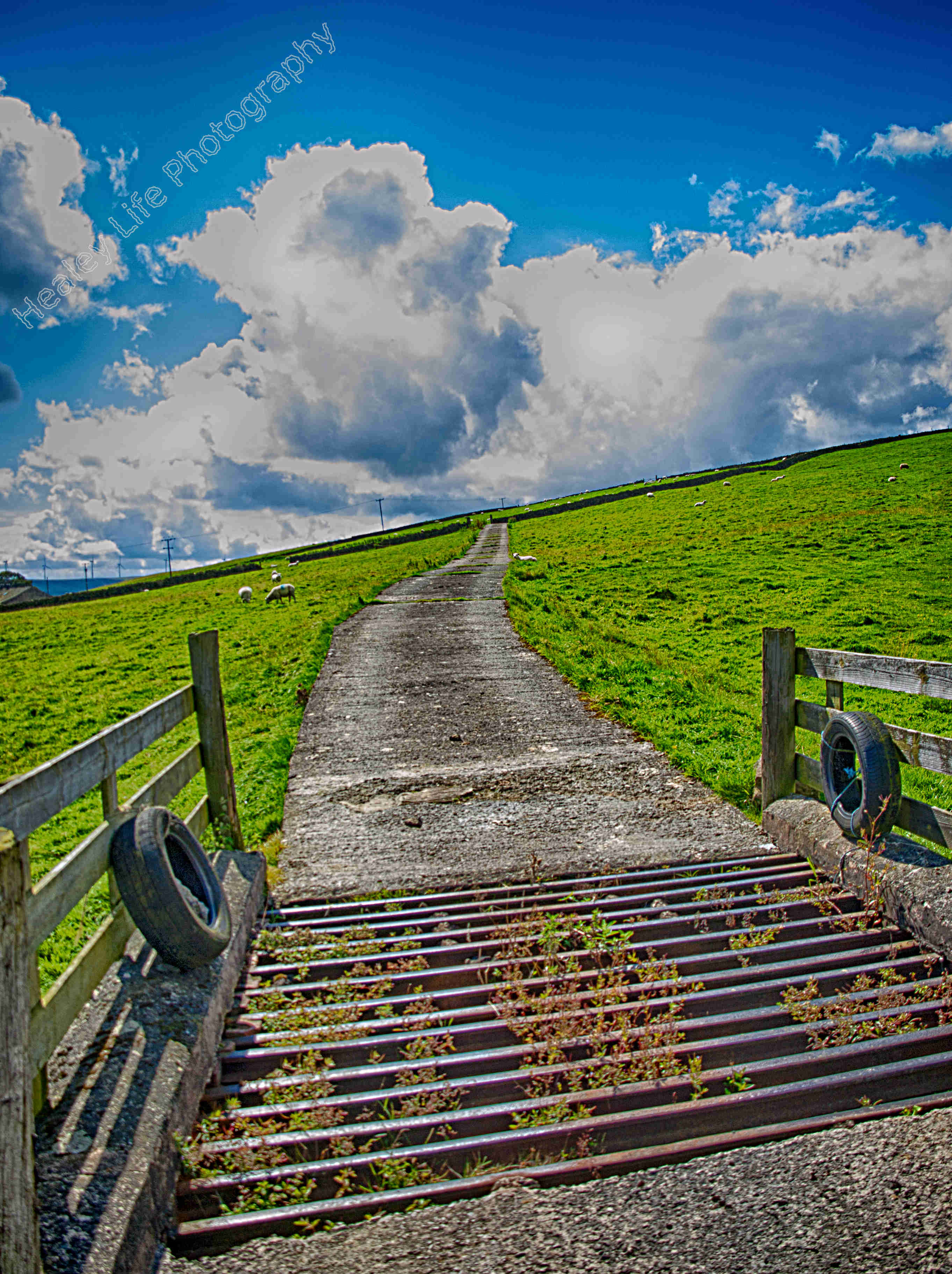 cattle grid to nowhere