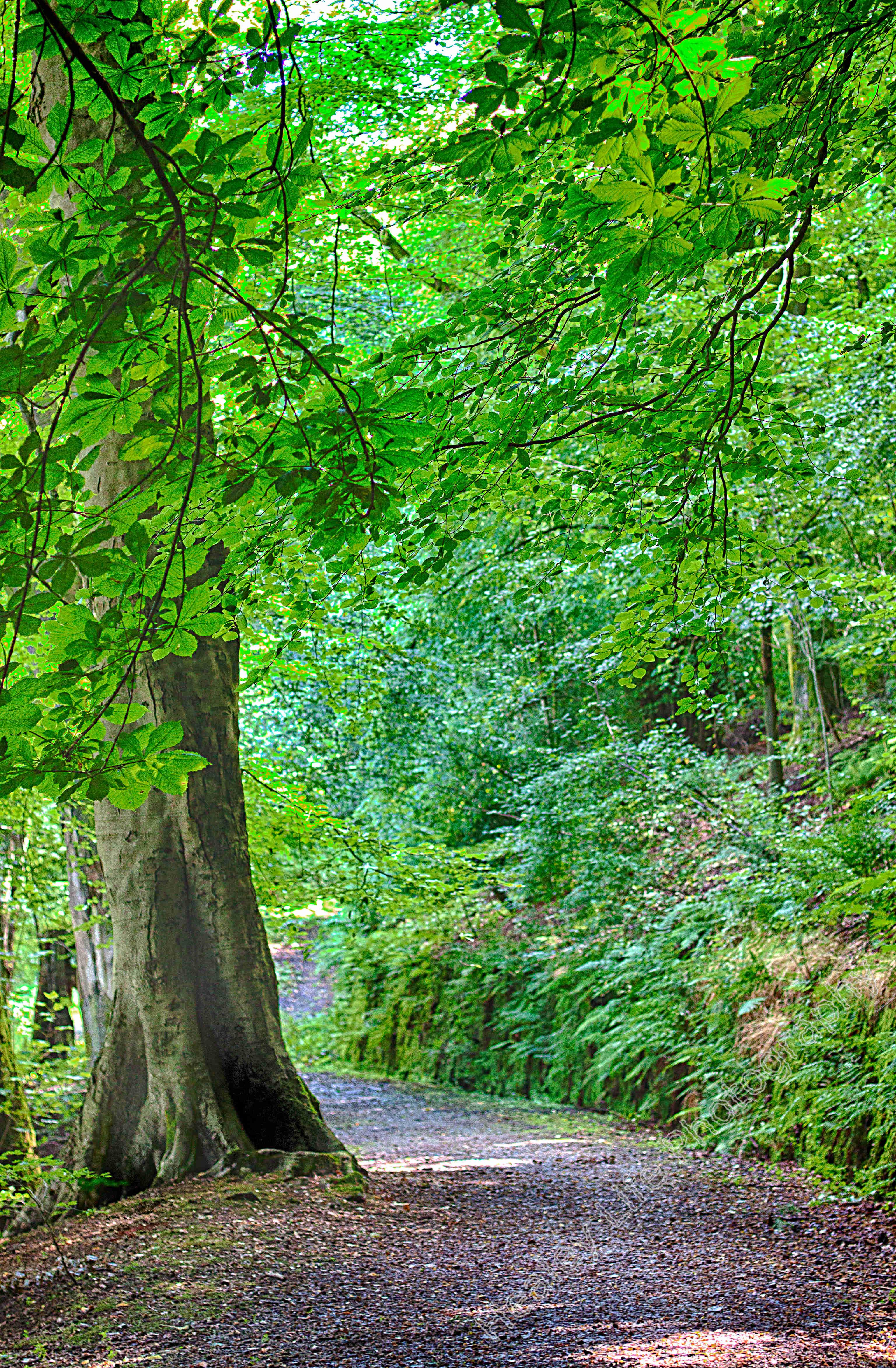 path by big tree